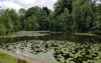 Leg of Mutton Lake – Boughton Monchelsea